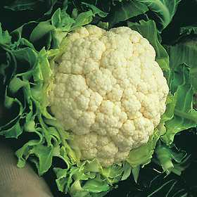 cauliflower (1)